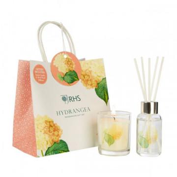 Hydrangea hədiyyə dəsti